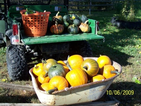 A bumper crop of pumpkins and winter squash