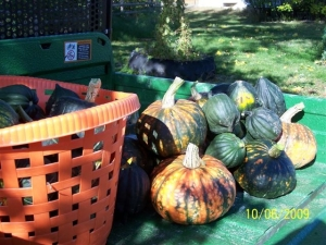 Heritage and Table King squash varieties